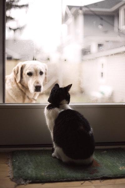Vriendelijkheid