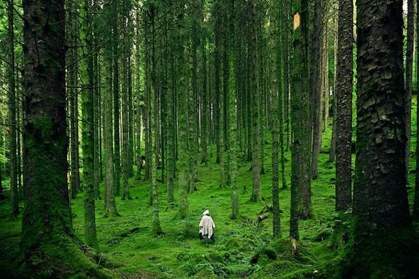 Waldeinsamkeit: wat is het, en hoe kun ook jij dit bosgevoel ervaren?